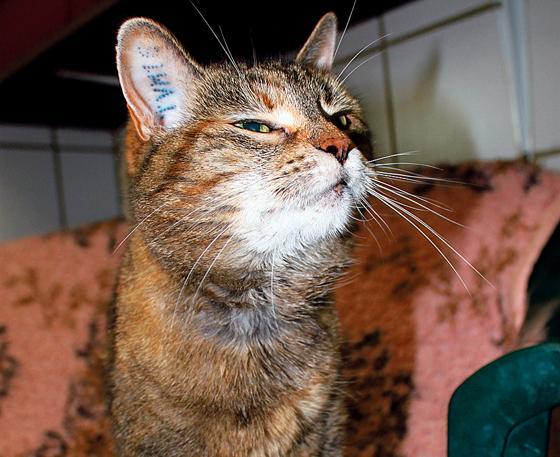 selbstbewusste katze sucht zuhause mit freiraum bei katzenfreunden. Black Bedroom Furniture Sets. Home Design Ideas