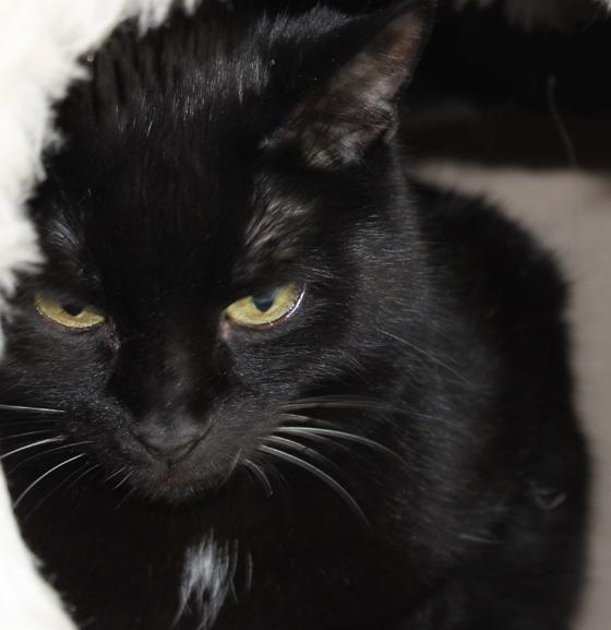 armer schwarzer kater sucht pl tzchen bei lieben katzenfreunden. Black Bedroom Furniture Sets. Home Design Ideas