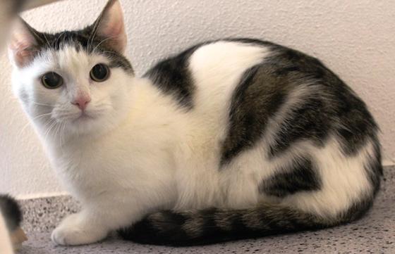 Katzen Parchen Suchen Neues Zuhause