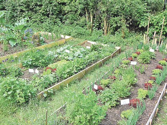 Tag Der Offenen Gartentür In Haar ökogarten Geöffnet