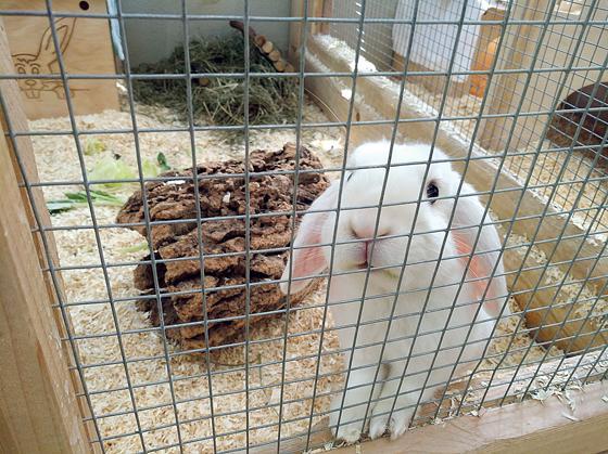 Tierheim Riem Platzt Aus Allen Nahten Und Benotigt Unterstutzung Helfer Dringend Gesucht