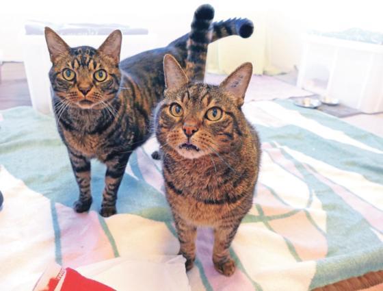 Tierheim Riem Nero Und Nelson Sollen Gemeinsam Vermittelt Werden